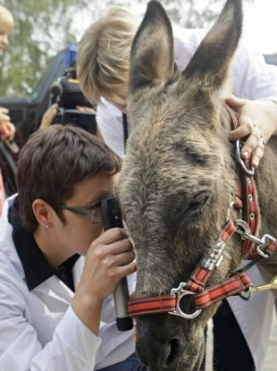 Anapka is examined by a vet upon arrival at a Moscow stable after being taken from resort.