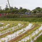 The peloton on the road to Kildare.