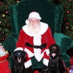 Okay not technically dogs in Santa hats but I mean they're with the big fella, so that counts, right? (Pacdog/Flickr)