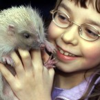 Here's Bryony, 12, with Alfie the hedgehog 