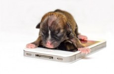 iPhone sized puppy could be world's smallest dog
