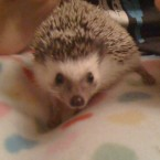 This is 'Tinkerbell' the hedgehog, submitted by a friend of TheJournal.ie. Sadly, we've learned that Tinkerbell passed away a few months ago. 