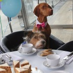 Animals having cups of tea at a tea party. Maybe if they have too much tea they will try to get into the cups....