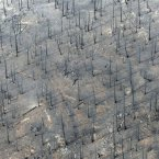 This aerial photo shows the destructive path of the Waldo Canyon fire in the Mountain Shadows subdivision area of Colorado Springs. (AP Photo/Denver Post, RJ Sangosti)