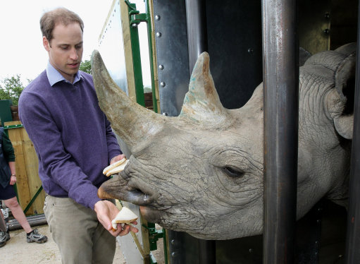 William slams trade in rhino horns