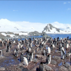 Google Streetview's first images from the Antarctic back in 2010. 