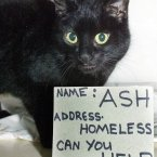 Eighteen month old cat Ash was looking for a home after being rescued from a boiler flue where he had been trapped for 10 days. He became stuck after plunging 15ft down the shaft of a derelict building in Gloucestershire and could only be rescued from the narrow flue because he had lost so much weight in the time he was trapped.