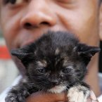Three-week-old kitten Cleo was brought to the basement of a New York deli in an attempt to lure Molly, an 11-month-old black cat, from the innards of a 19th century building where she has been trapped for nearly two weeks. (AP Photo/Dima Gavrysh)