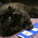 Kuorii Enjoy The Silence of Exton, a 5-month-old black Persian kitten from Venice, Italy, puts her paw on her European Union Animal Companion Passport during a preview of the 2006 Cat Fanciers' Association-Iams Cat Championship at New York's Madison Square Garden. Alright then. (AP Photo/Richard Drew)