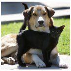 A black cat approaches a resting dog, and then makes herself quite comfortable with her new-found friend. Keep you friends close, and your enemies closer? (AP Photo/Amy Sancetta)