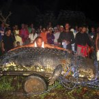 Mayor Cox Elorde of Bunawan pretends to measure Lolong after its capture (AP Photo)