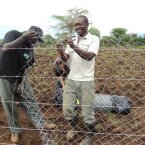 Securing a fence so that children and animals cannot access the area where the pond is
