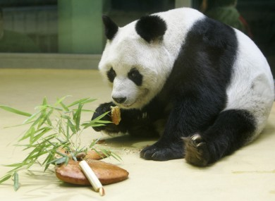 File photo of Bao Bao in 2005