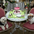 Timmy the Bichon Frise (left) and Muffin the Shih Tzu (right) with their cake after their unique dog wedding as part of Harrods' 'Anything is Possible' season. (Lewis Whyld/PA)