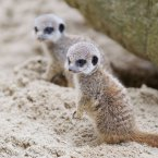 REPRO FREE 20/09/2012