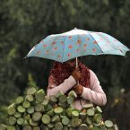 A Kashmiri girl waits for customers in the rain as she sells lotus seeds on the outskirts of Srinagar, India. (AP Photo/Mukhtar Khan)