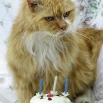 Spike, the world's oldest living cat, with a birthday cake as he turned 30 on 20/05/00, making him 210 in cat years. The ginger and white tom was bought for two shillings and six pence as a kitten in London's Brick Lane market in 1970. (Barry Batchelor/PA Archive/Press Association Images)