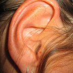 Darwin's Point is a small fold of skin towards the top of the ear, which is found in about 10 per cent of humans. It's believed that it could have once been a part of a joint that allowed the ear to swivel or flop downwards. 
