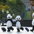 Giant pandas have descended on Edinburgh this weekend for the semi-finals of the Chengdu Pambassador competition, which offers a chance for four people to become global Pambassadors and tour the world with a message of conservation. (Mark Runnacles/PA)