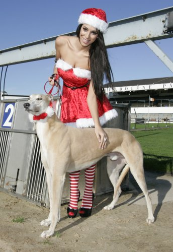 1/11/2011 Greyhound Racing