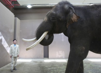 Koshik, a 22-year-old Asian elephant, puts his trunk in his mouth to modulate sound next to his chief trainer Kim Jong-gab at the Everland amusement park in Yongin, South Korea.