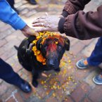 Nepalese policemen apply vermillion powder and perform rituals on a dog during the Tihar festival celebrations at a police kennel division in Katmandu, Nepal. Dogs are worshipped to acknowledge their role in providing security during Tihar festival, one of the most important Hindu festivals dedicated to the worship of the Goddess of wealth Laxmi. (AP Photo/Niranjan Shrestha)
