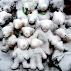 Snow-covered stuffed animals with photos attached sit at a memorial in Newtown, Conn. People continue to visit memorials after gunman Adam Lanza walked into Sandy Hook Elementary School in Newtown, Friday, Dec. 14, and opened fire, killing 26, including 20 children, before killing himself. (AP Photo/Craig Ruttle)