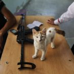 24 August: A kitten being raised by a Free Syrian Army soldiers. (AP Photo/Muhammed Muheisen)