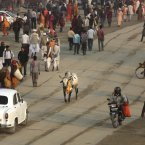 A stray cow walks as Hindu devotees arrive at Sangam. (AP Photo /Manish Swarup)