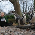 London Zoo keeper Zuzana Matyasova conducts their annual stocktake of animals in the penguin enclosure. (Image: Stefan Rousseau/PA)