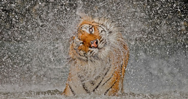 14 incredible images: winners of 2012 National Geographic Photo Contest revealed