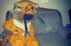 Snapshot: Missouri mascot Truman the Tiger 'pictured hitting a bong'