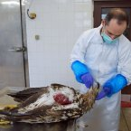 Cosme Sanchez, Pathologist at Regional Veterinary Laboratory, Cork.