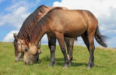 Traces of horsemeat DNA found in Polish beef