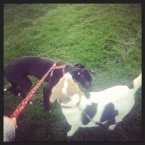 Out for a stroll with his new sister Bailey.