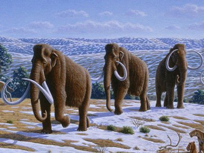 woolly-mammoth-extinct-for-10000-years