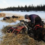Paige Drobny tends to her dog team in the Athabaskan village of Nikolai, Alaska.