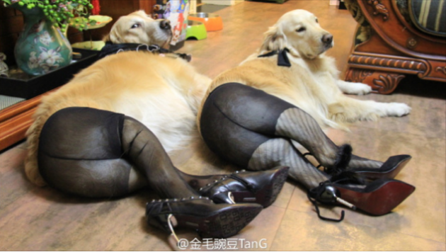 dogs in tights