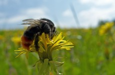 "Beekeepers ""appalled"" Govt against pesticide restriction proposal"