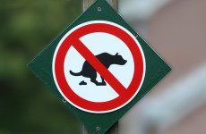If you don't pick up your dog poo in Spain then this might happen…